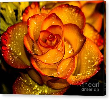 Droplet Rose Canvas Print