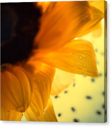Canvas Print featuring the photograph Droplets by Bobby Villapando