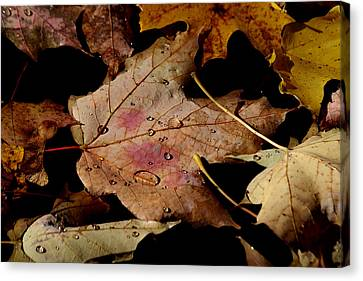 Canvas Print featuring the photograph Droplets On Fallen Leaves by Doris Potter