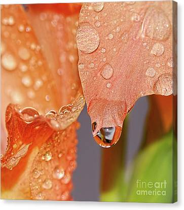 Droplets On Gladioli By Kaye Menner Canvas Print