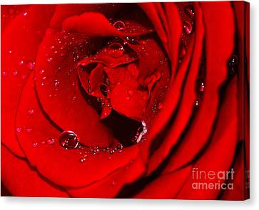 Droplets On Red Rose By Kaye Menner Canvas Print by Kaye Menner