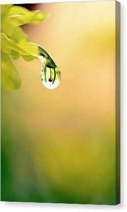 Drops Of Colorful Reflection Canvas Print by Laura Mountainspring