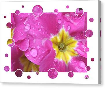 Pink Primroses Canvas Print - Bubbly Pink Raindrops  by Carol Groenen