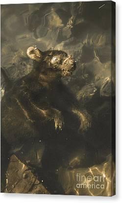 Drowned Tasmanian Possum Canvas Print by Jorgo Photography - Wall Art Gallery