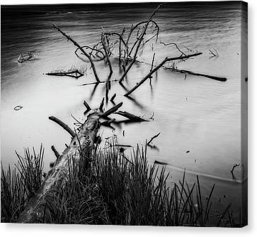 Canvas Print featuring the photograph Drowning by Alan Raasch