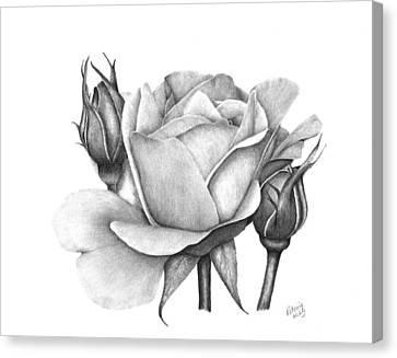 Drum Rose Canvas Print