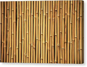 Dry Bamboo Rows Canvas Print by Brandon Tabiolo - Printscapes