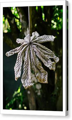 Dry Leaf Collection 1 Canvas Print by Totto Ponce
