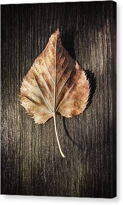 Dry Leaf On Wood Canvas Print by Scott Norris