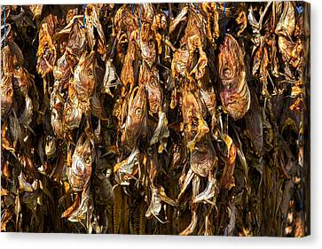 Drying Fish Heads - Iceland Canvas Print by Stuart Litoff