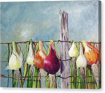 Drying Onions Canvas Print