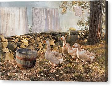 Canvas Print featuring the photograph Drying Out by Robin-Lee Vieira