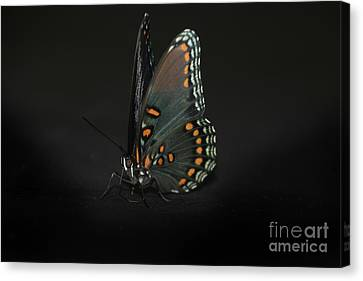 Drying Wings Canvas Print by Judy Hall-Folde