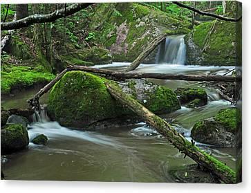 Dual Falls Canvas Print by Glenn Gordon