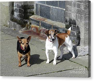 Dublin Dogs Canvas Print by Hugh Reynolds