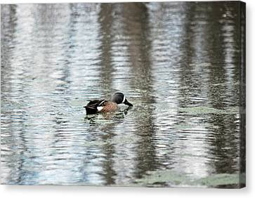 Canvas Print featuring the photograph Duck Alone by Teresa Blanton