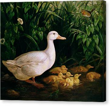 Duck And Ducklings Canvas Print by English School
