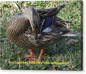 Duck Annoyances Canvas Print by Rana Adamchick