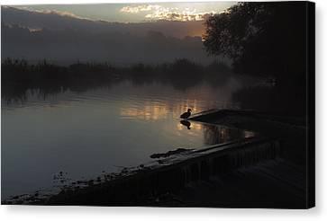 Duck At Dawn Canvas Print by Ian Merton