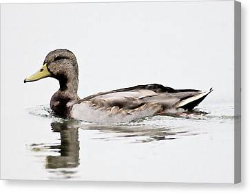 Canvas Print featuring the photograph Duck by John Hix