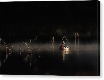 Canvas Print featuring the photograph Duck Of The Morning Mist by Bill Wakeley