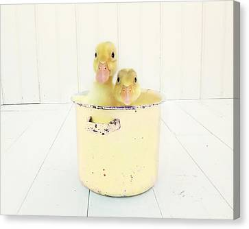 Duck Soup - Yellow Version Canvas Print by Amy Tyler