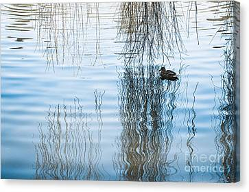 Duck Under Willow Droop Twigs Canvas Print