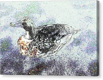 Canvas Print featuring the photograph Duck With Fine Plumage by Nareeta Martin