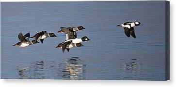 Duckin Out Canvas Print by Randy Hall