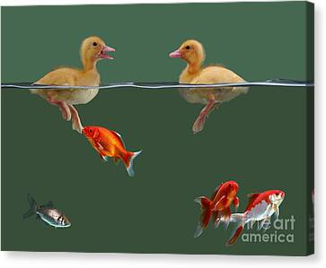 Ducklings And Goldfish Canvas Print by Jane Burton