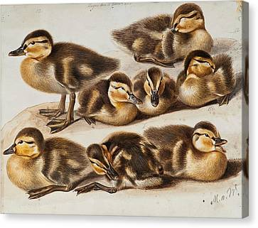 Ducklings Canvas Print by Magnus von Wright