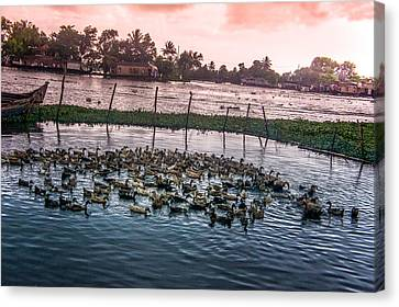 Boats In Water Canvas Print - Ducks At Backwaters Around Alleppey, Kerala, India by Art Spectrum