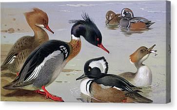 Ducks By A Lake Canvas Print by Archibald Thorburn