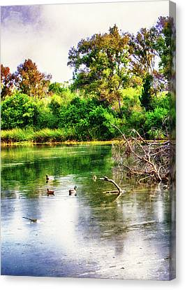 Nature Center Pond Canvas Print - Ducks In A Pond by Joseph Hollingsworth