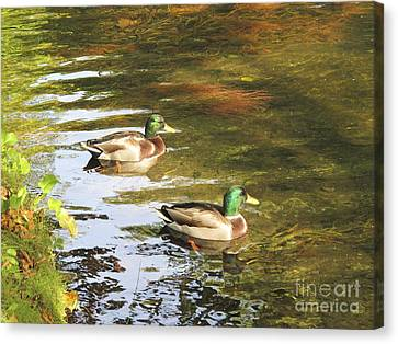Dublin Ducks Canvas Print by Hugh Reynolds