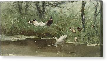Ducks In The Ditch Canvas Print by Willem Maris