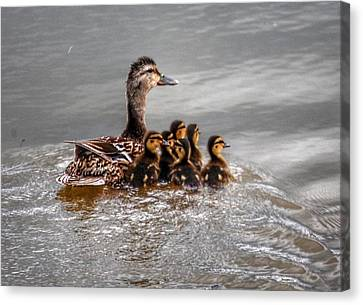 Canvas Print featuring the photograph Ducky Daycare by Sumoflam Photography
