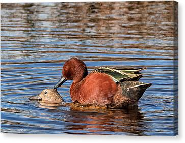 Kathleen Canvas Print - Ducky Delight by Kathleen Bishop