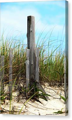 Canvas Print featuring the photograph Dune Grass At Holgate Beach by John Rizzuto