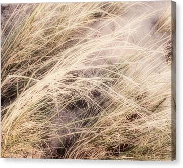 Dune Grass Nature Photography Canvas Print by Ann Powell
