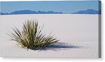 Canvas Print featuring the photograph Dune Plant by Marie Leslie