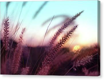 Canvas Print featuring the photograph Dune Scape by Laura Fasulo