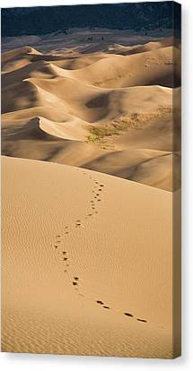 Dunefield Footprints Canvas Print by Adam Pender