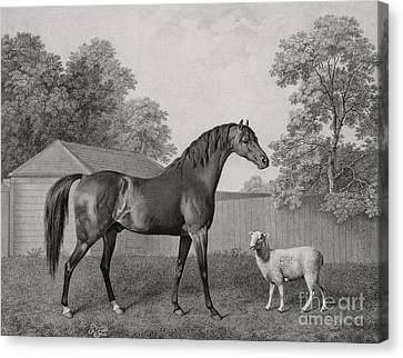 Dungannon Canvas Print by George Stubbs