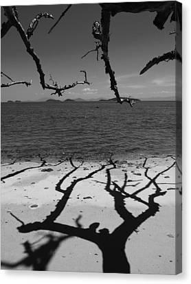 Dunk Island Australia 172 Canvas Print by Per Lidvall