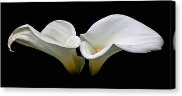 Duo Canvas Print by Cathie Tyler