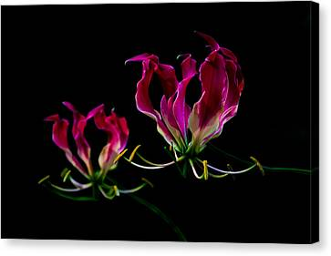 Duo Lily Canvas Print by David Paul Murray
