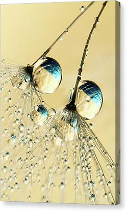 Canvas Print featuring the photograph Duo Shower Dandy Drops by Sharon Johnstone