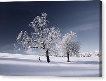 Duo White Canvas Print by Philippe Sainte-Laudy