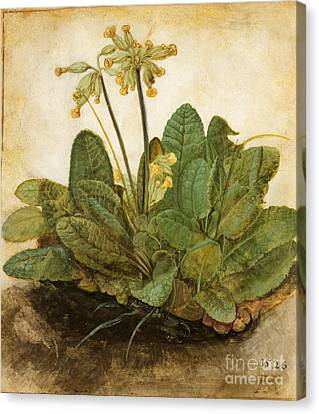Durer Tuft Of Cowslips Canvas Print by Granger